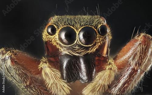 Photo Spider portrait