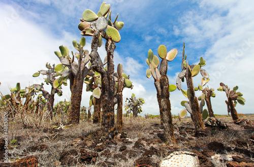 Poster de jardin Parc Naturel Opuntia cactus forest
