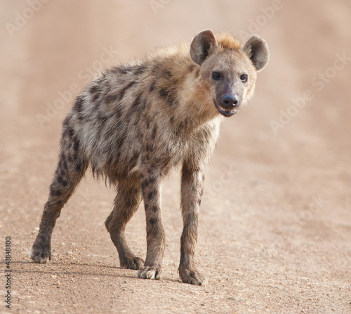 In de dag Hyena charming hyena