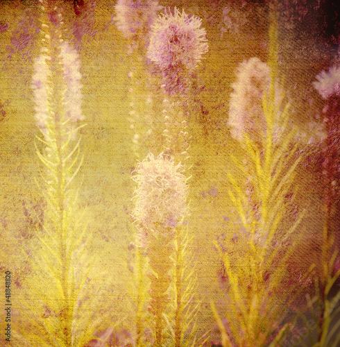 Fototapeta na wymiar old background, flowers of the meadow
