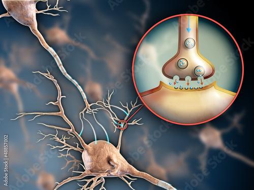 Plakat na zamówienie Neuron synapse