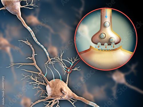 synapsa-neuronu