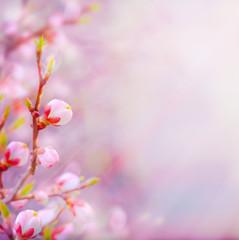 Fototapeta Minimalistyczny art Beautiful spring blossoming tree on sky background