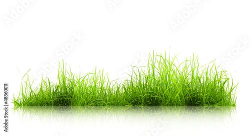 Deurstickers Gras grass