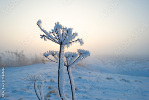 Plant with hoarfrost at dawn Fototapet