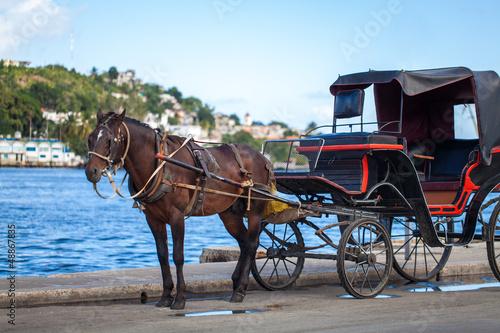 karibik Kuba Havanna Kutsche mit Pferd Canvas Print