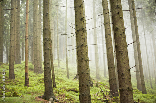 Spoed Foto op Canvas Bos in mist Forest in mystery fog, Czech Republic
