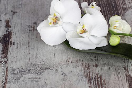 Fotografie, Obraz  Weisse Orchidee auf altem Holz