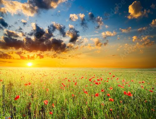 Obraz Pole z zieloną trawą i czerwone maki - fototapety do salonu
