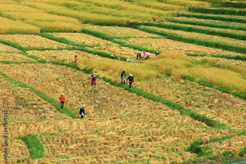 Fotografie, Obraz  the harvest will be finish