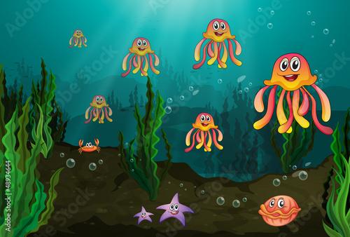 Foto op Plexiglas Onderzeeer Underwater creatures