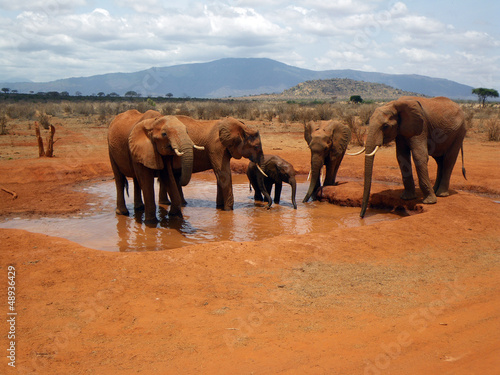 Spoed Foto op Canvas Elephants in Tsavo