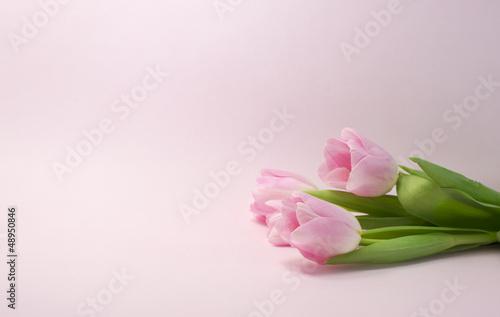 Garden Poster Floral pink rose