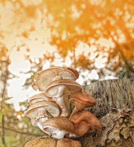 Valokuva  Bracket fungus