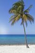 Palme am Strand, Kuba