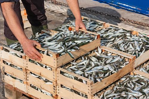 Deurstickers Vis mediterranean sardines