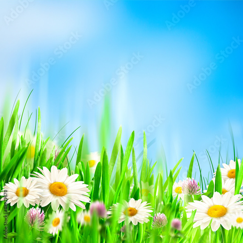 Poster Fleuriste Chamomile symphony. Abstract natural backgrounds for your design