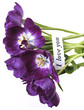purple tulips with card