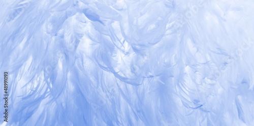 fototapeta na szkło Blue feathers background