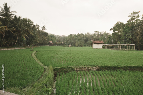 Foto op Plexiglas Indonesië Rice Fields, Bali, Indonesia