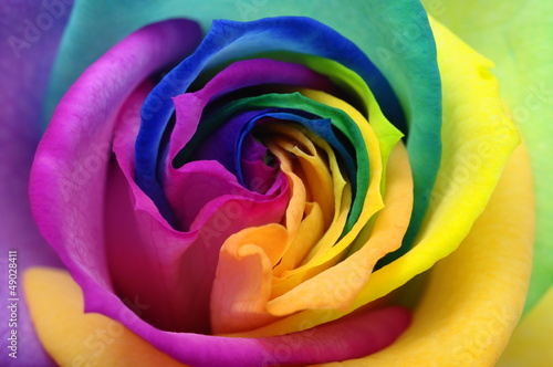 Foto op Canvas Madeliefjes Close up of rainbow rose heart