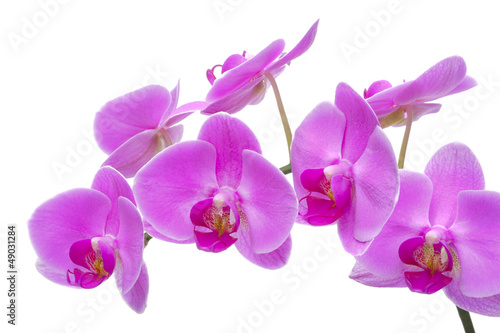 Aluminium Prints Orchid Orchidee Detail Blume Blüte