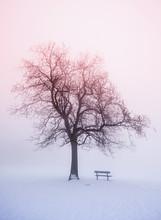 Winter Tree In Fog At Sunrise