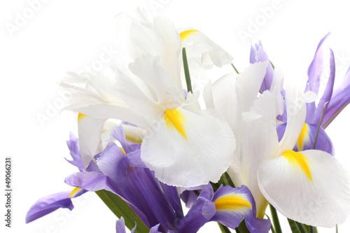 Poster Iris Beautiful bright irises isolated on white