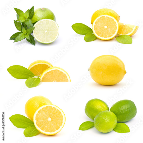 Fotografia, Obraz  collection of fresh limes and lemons - collage