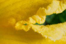 Kwiat Makro