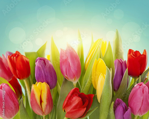 Obraz Tulip flowers - fototapety do salonu