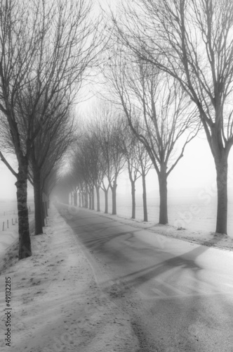 wysocy-nadzy-drzewa-oprocz-wiejskiej-drogi-w-zimie