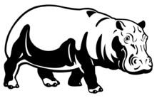 Hippopotamus Black White Image