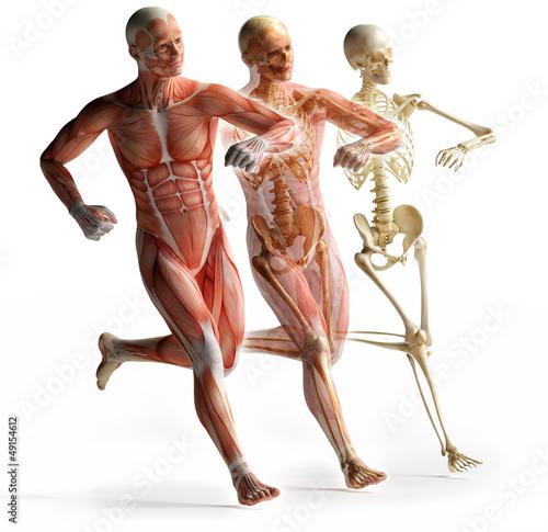 trojwymiarowa-anatomia-ludzkiego-ciala