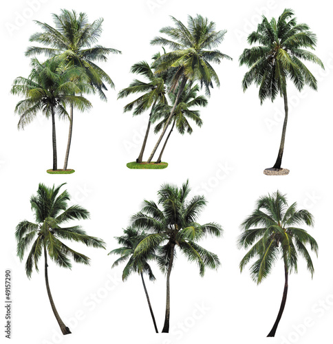 Stickers pour porte Palmier Collection plam tree isolated on white background