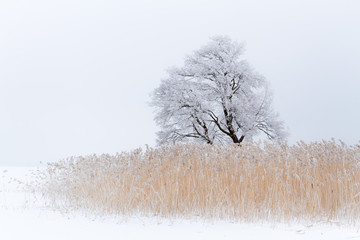 FototapetaLonely tree on the snow-covered lake