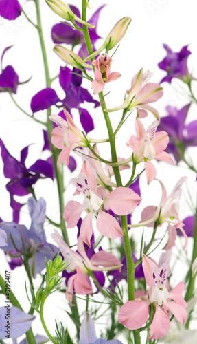 Aluminium Prints Flower shop Delphinium flowers