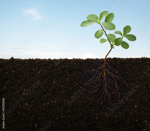 Canvas roots of a plant