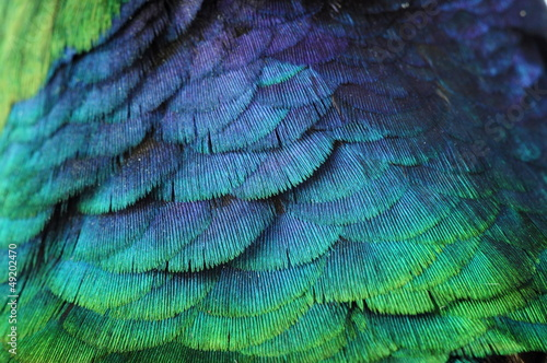 Fototapeta pióro tło kolor obraz