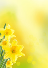 Yellow Spring Background