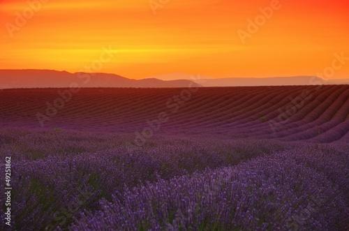 Lavendelfeld Sonnenuntergang - lavender field sunset 03