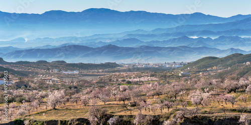 View of Almond Blossom, Huercal Overa, Almeria, Spain плакат
