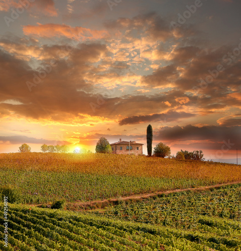 Foto op Canvas Toscane Chianti vineyard landscape in Tuscany, Italy