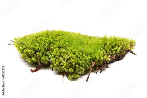 Fotografie, Obraz  Green moss