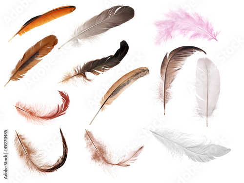 set of twelve isolated feathers