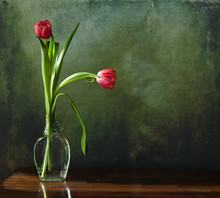 Two Tulips In Glass Vase