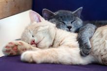 Cute Kittens Sleeping Together