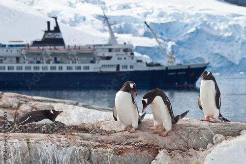 Staande foto Antarctica Eselspinguine (pygoscelis papua) vor Kreuzfahrtschiff