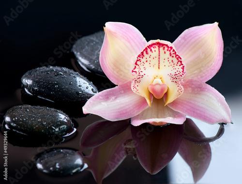 Plissee mit Motiv - Spa Stones and Orchid Flower over Dark Background