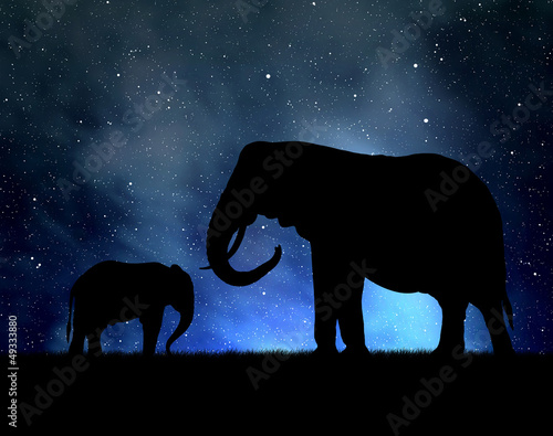 sylwetka-slonie-na-nocnym-niebie